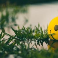 PERMA wellbeing quiz